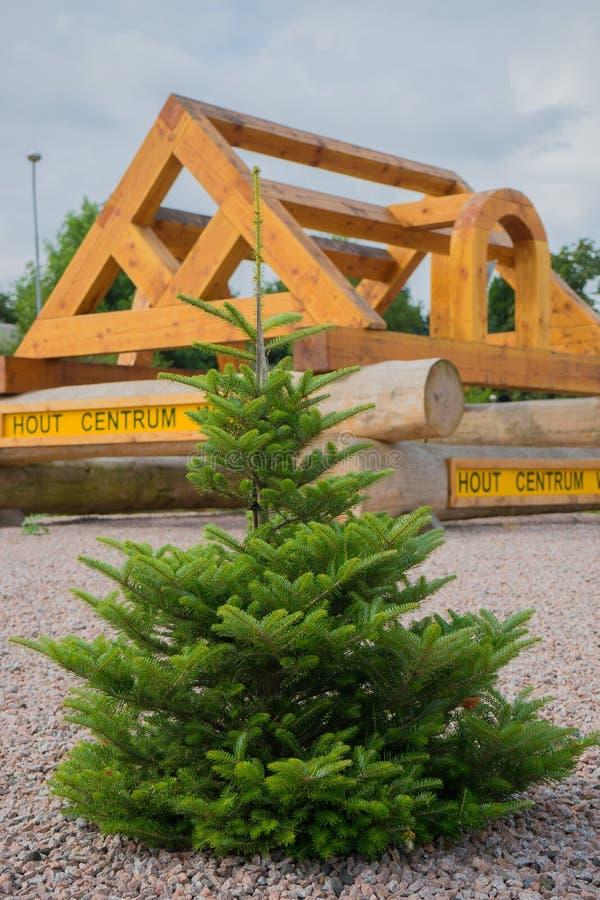 Компания древесин centrum hout изображения стоковое изображение rf