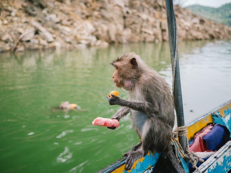 Компасная площадка суда, ТАИЛАНД обезьяны на шлюпке, обезьяне ест помадки стоковые фото
