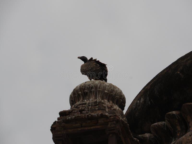 Комплекс виска дворца в орле конца-вверх Orcha Madhya Pradesh r стоковые фотографии rf