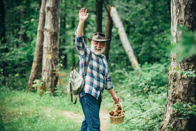 Комплектация грибов Идти старика Пенсионер Grandpa Старший пеший туризм в лесе стоковое изображение rf