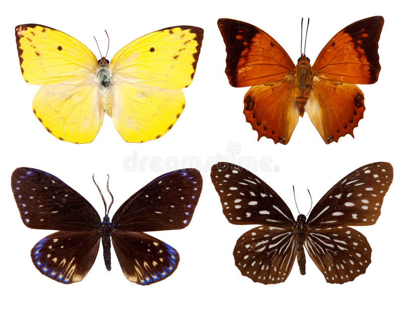 комплект бабочки экзотический стоковое фото