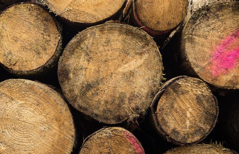 Комплект валить деревьев Хоботы сложенных деревьев, близкое поднимающего вверх стоковые изображения rf