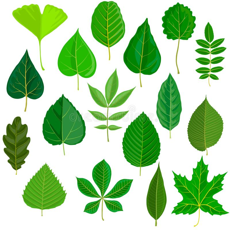 Комплект вектора листьев дерева иллюстрация вектора
