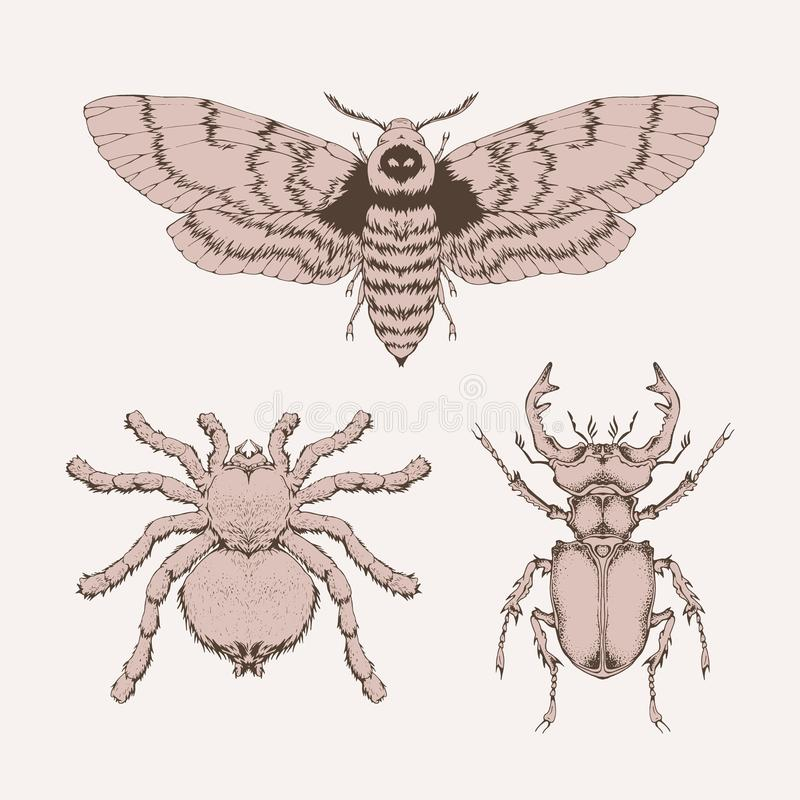 Комплект вектора насекомых нарисованных рукой Различные насекомые в реалистическом иллюстрация вектора