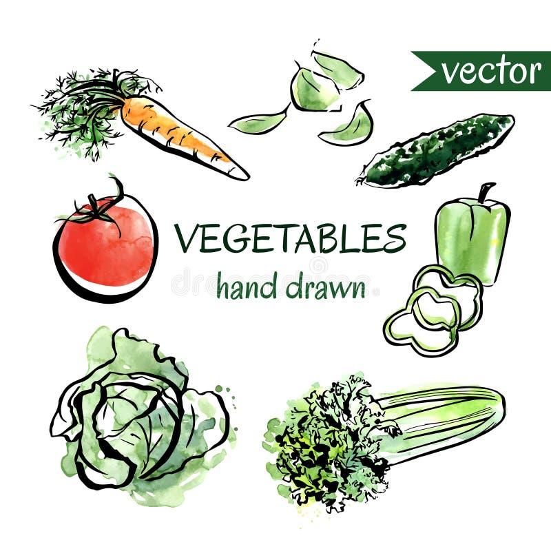 Комплект вектора овощей нарисованных рукой иллюстрация штока