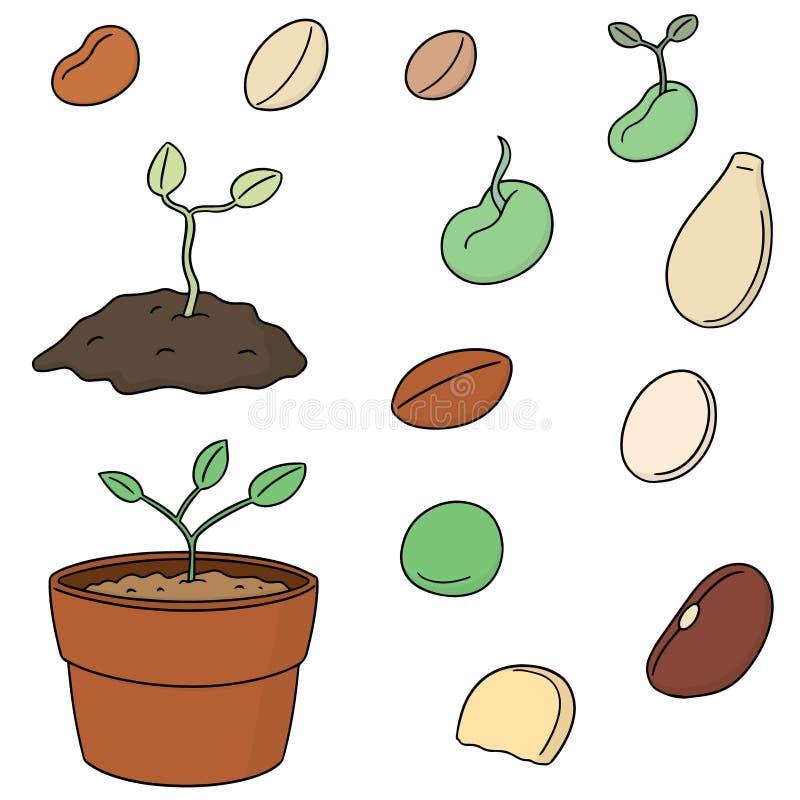 Комплект вектора семени завода иллюстрация вектора