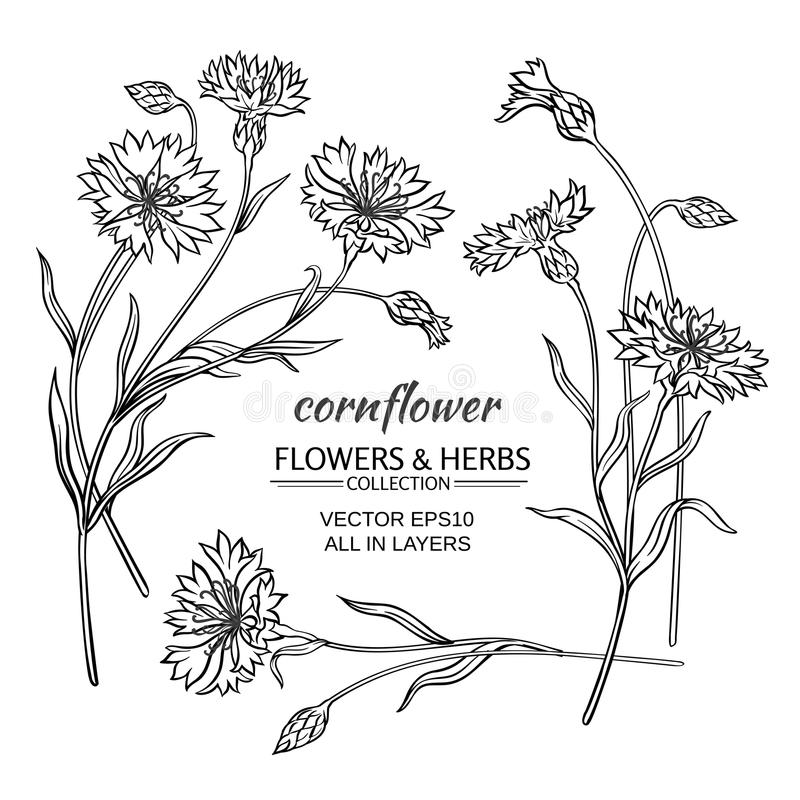 Комплект вектора Cornflower иллюстрация вектора