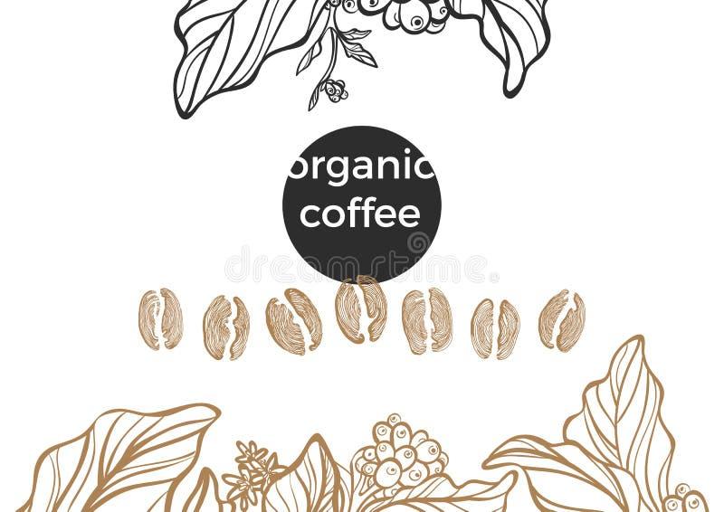 Комплект ветви и фасолей кофе вектор иллюстрация штока