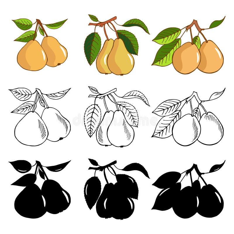 Комплект груши Цвет, monochrome и варианты силуэта Концепция вектора свежих овощей Здоровое питание плоский стиль illustr иллюстрация штока