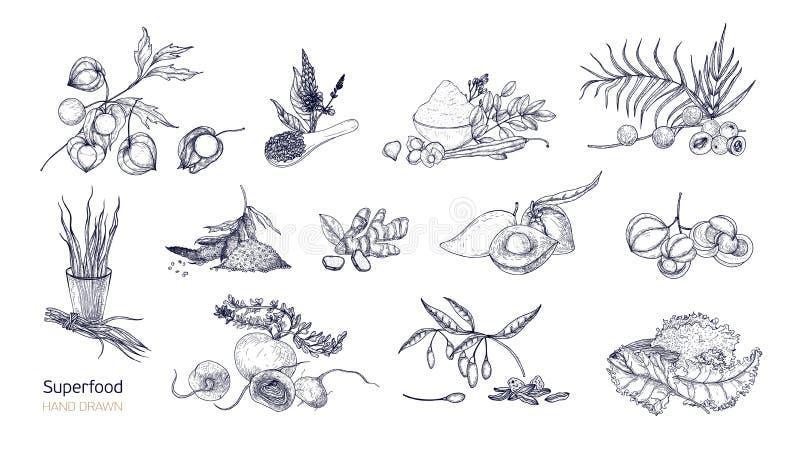 Комплект детальных чертежей superfoods Плодоовощи, ягоды, семена, урожаи корня, листья и порошок нарисованные с линиями контура иллюстрация штока