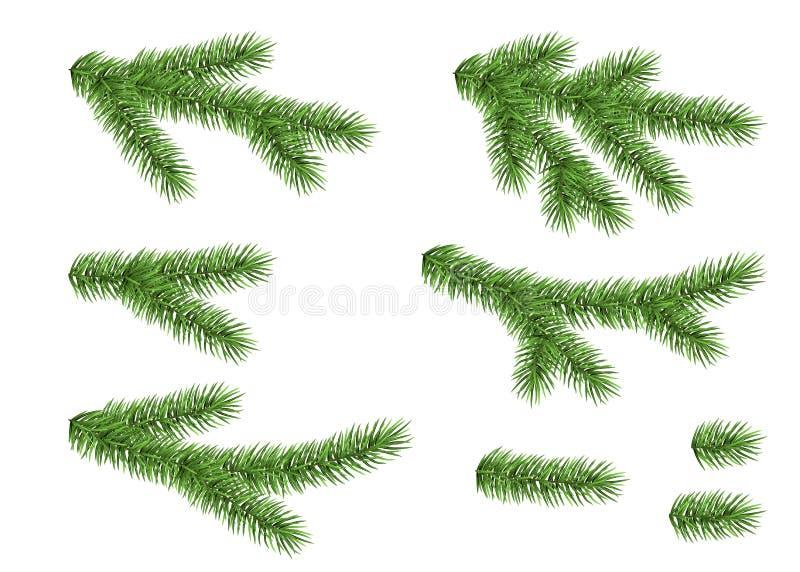Комплект елевой ветви иллюстрация штока