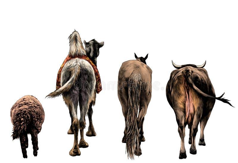 Комплект животных от задней части лошади верблюда овец и коровы и ишак идут вперед бесплатная иллюстрация