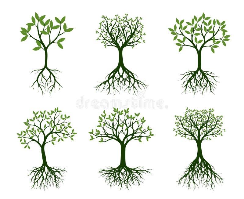 Комплект зеленых деревьев с корнем также вектор иллюстрации притяжки corel бесплатная иллюстрация