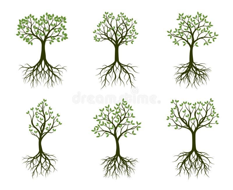 Комплект зеленых деревьев с листьями и корнем также вектор иллюстрации притяжки corel иллюстрация штока