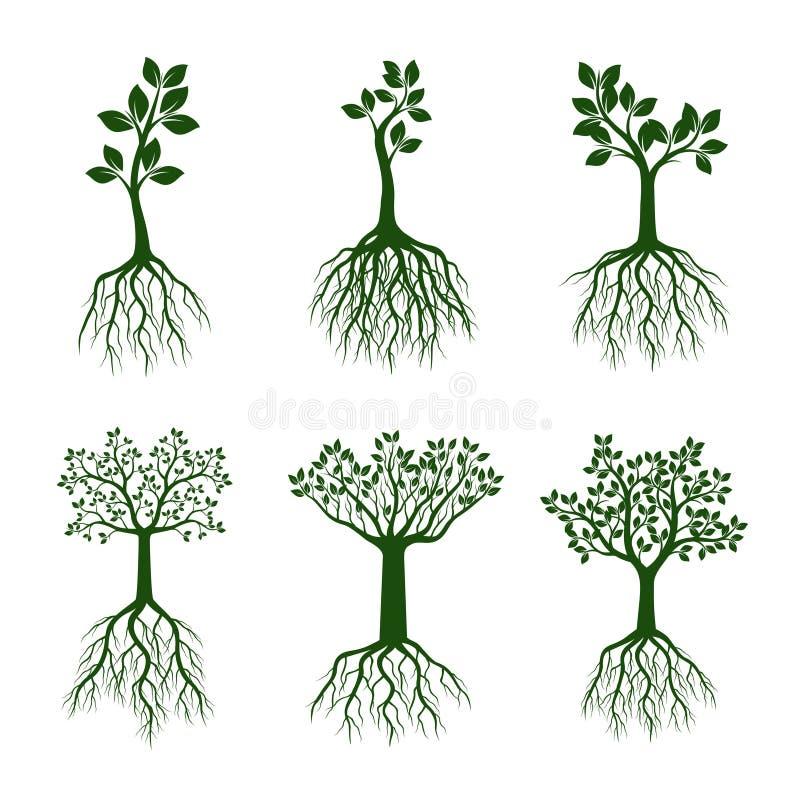 Комплект зеленых деревьев с листьями и корнями иллюстрация штока