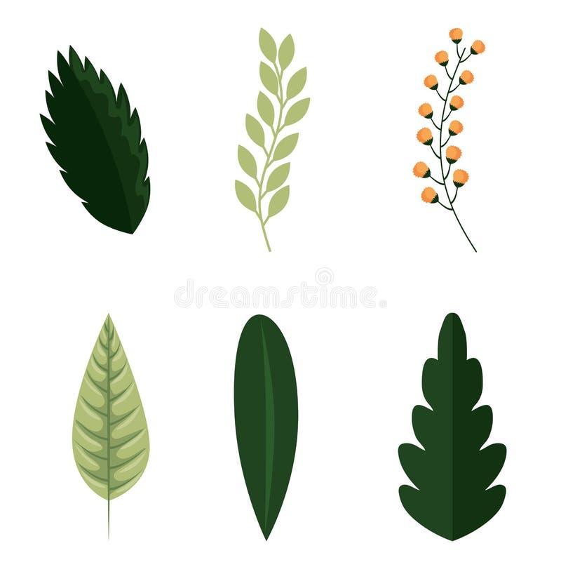 Комплект зеленых листьев природы иллюстрация штока