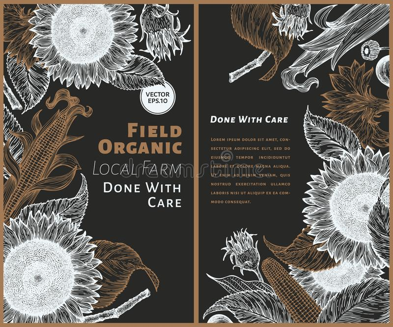 Комплект 2 знамен солнцецвета Шаблон дизайна солнцецвета и мозоли Иллюстрация вектора нарисованная рукой на доске мела Смогите бы бесплатная иллюстрация