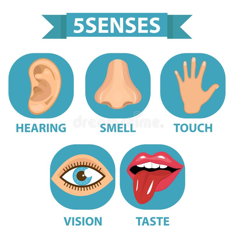 комплект значка 5 чувств Касание, запах, слух, зрение, вкус белизна изолированная предпосылкой также вектор иллюстрации притяжки  бесплатная иллюстрация
