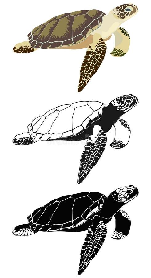 Комплект изображений морской черепахи также вектор иллюстрации притяжки corel бесплатная иллюстрация