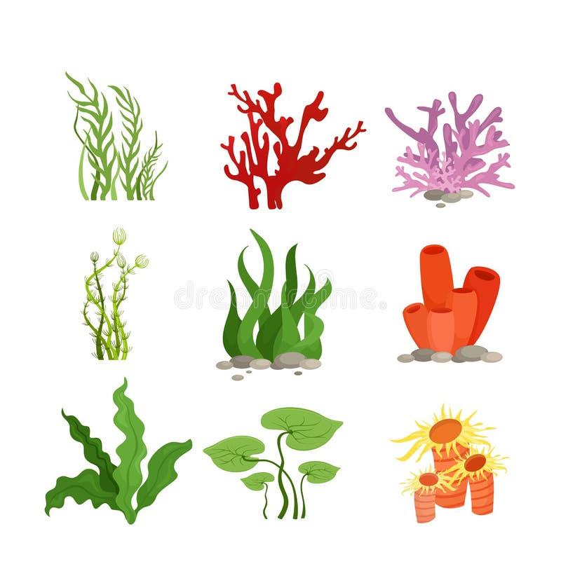 Комплект иллюстрации вектора красочных водорослей и коралла изолированных на белой предпосылке в стиле шаржа плоском бесплатная иллюстрация
