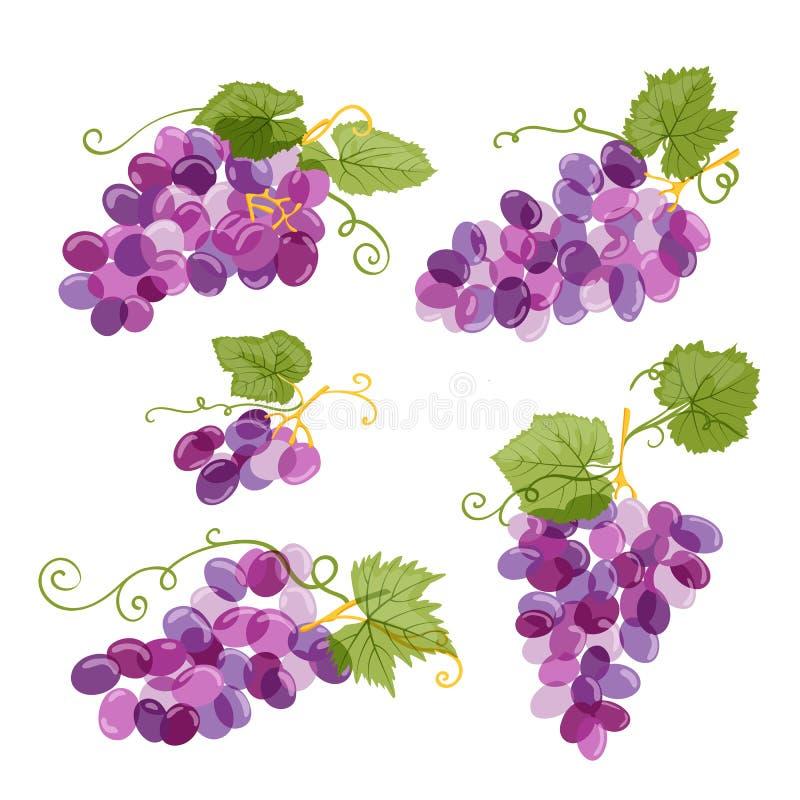 Комплект иллюстрации лозы виноградин изолированной на белой предпосылке Свежей виноградина нарисованная рукой с зелеными листьями бесплатная иллюстрация