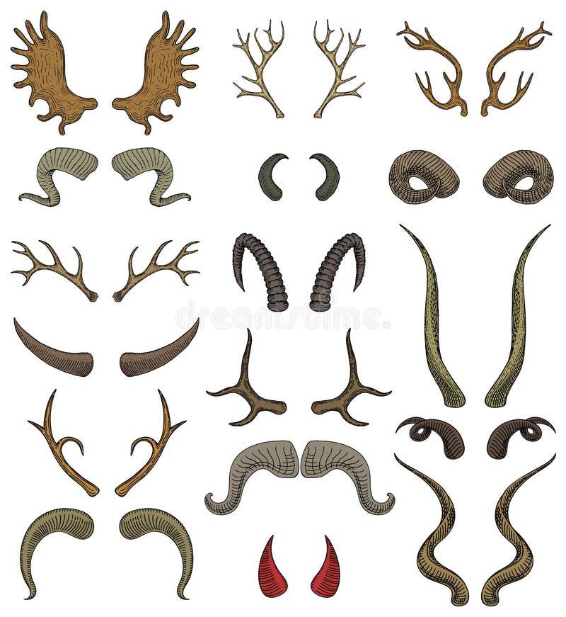 Комплект иллюстрации antlers дикого животного и оленей или антилопы вектора рожка horned рогового трофея звероловства северного о иллюстрация штока
