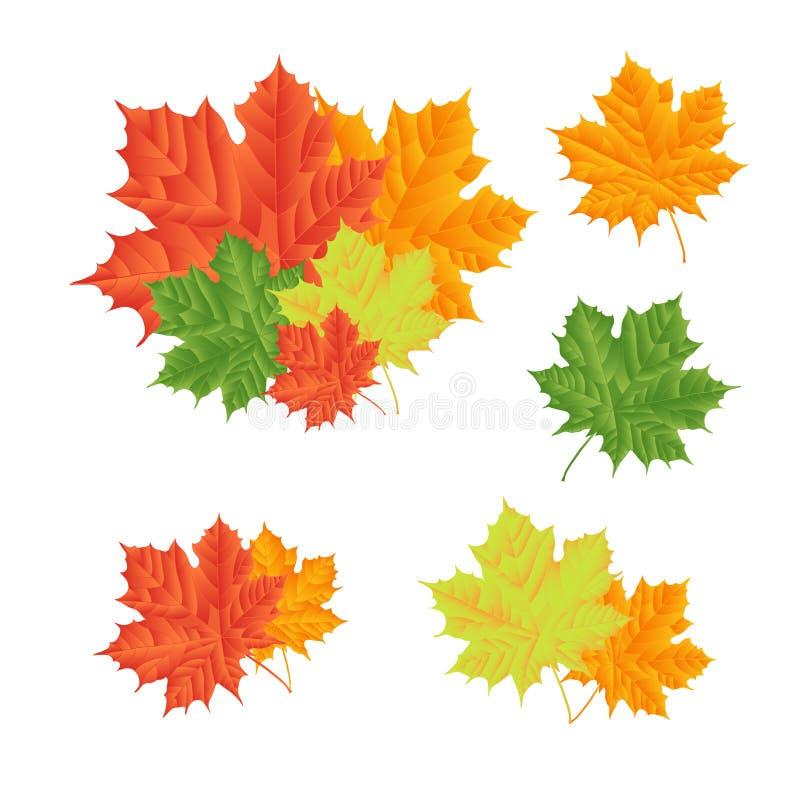 Комплект - кленовые листы для естественного украшения изолировано Illu вектора иллюстрация штока