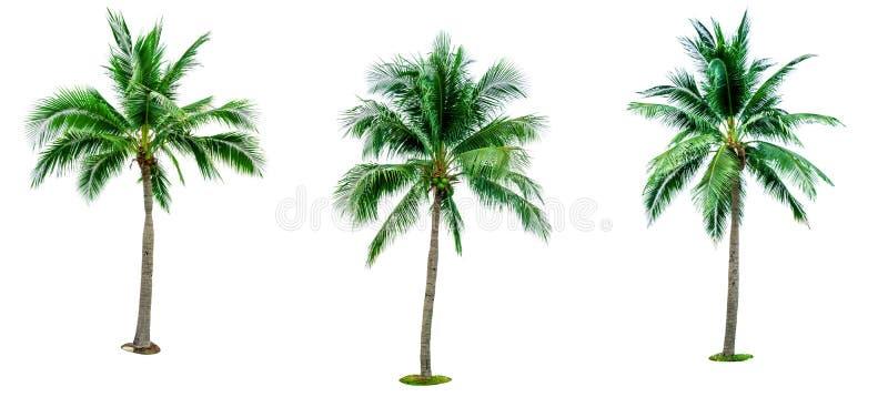 Комплект кокосовой пальмы изолированный на белой предпосылке используемой для рекламировать декоративную архитектуру Лето и конце стоковое изображение rf