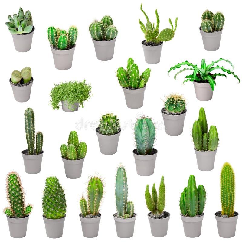 Комплект крытых заводов в баках - кактусах изолированных на белизне стоковое изображение rf
