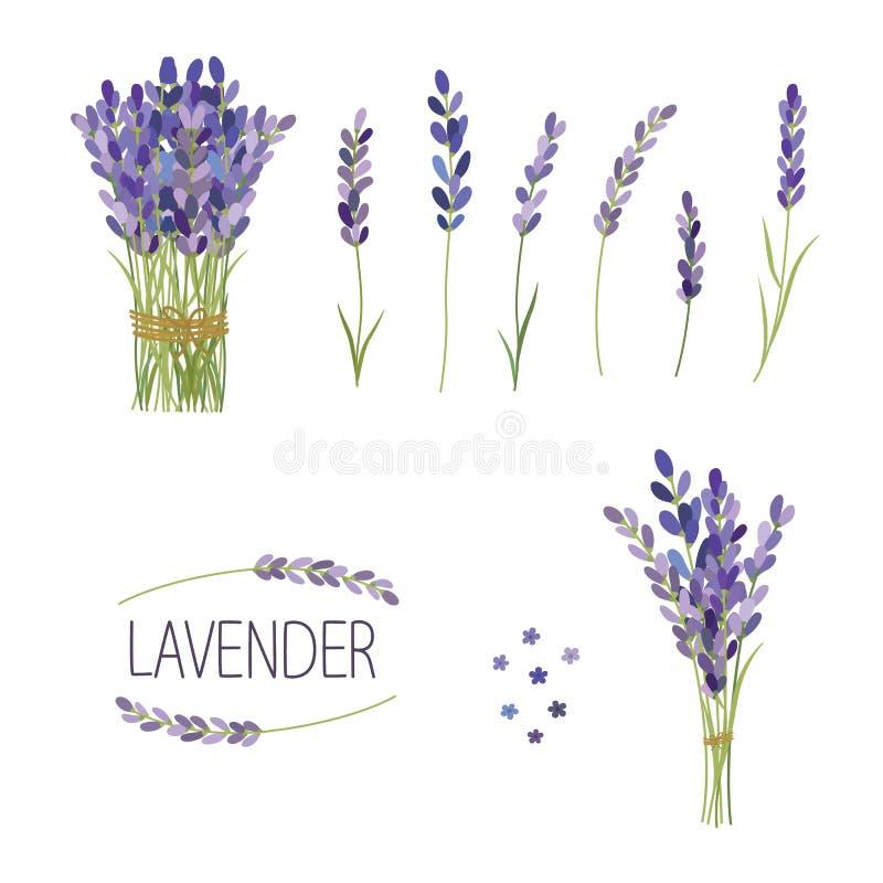 Комплект лаванды цветет элементы Собрание лаванды цветет на белой предпосылке бесплатная иллюстрация