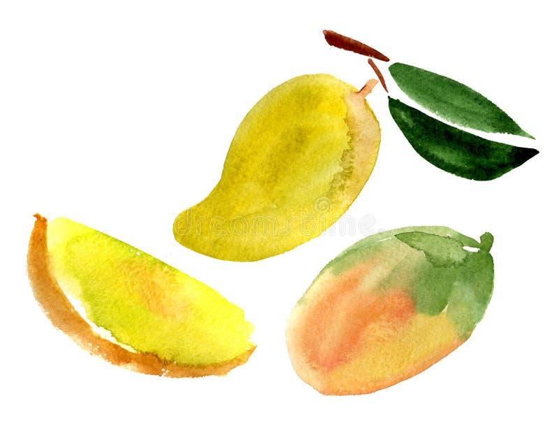 комплект мангоа иллюстрация вектора
