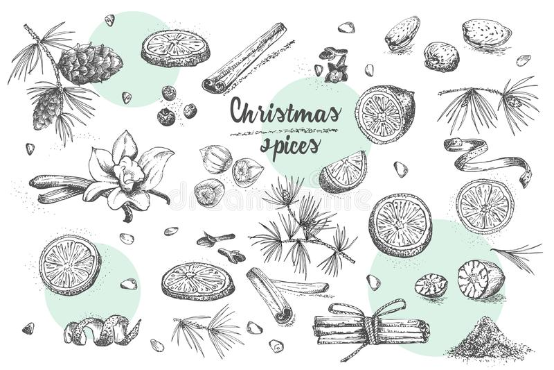 Комплект нарисованной рукой зимы рождества spices картина Традиционно использованный в сделанных десертах, горячее обдумыванное в иллюстрация штока
