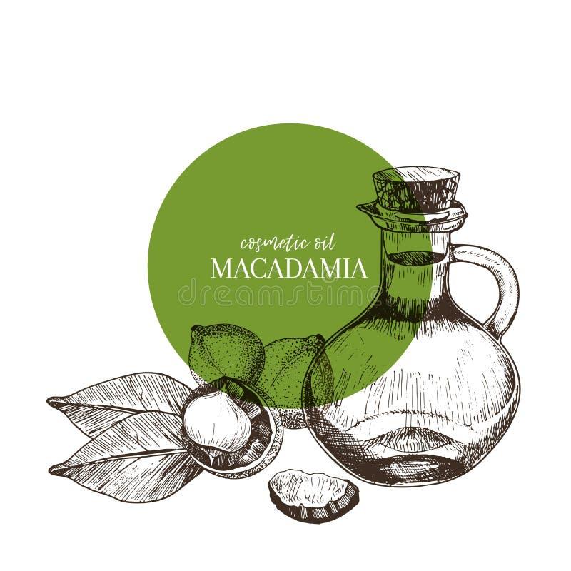 Комплект нарисованный рукой эфирных масел Гайка макадамии вектора Целебная трава с стеклянной бутылкой капельницы Выгравированное бесплатная иллюстрация