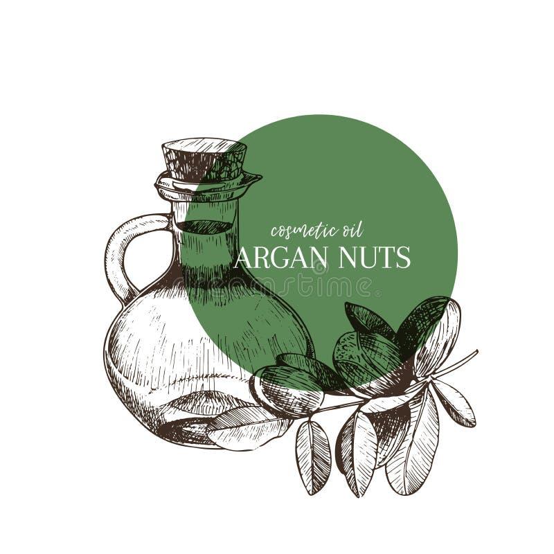 Комплект нарисованный рукой эфирных масел Гайка argan вектора Целебная трава с стеклянной бутылкой капельницы Выгравированное иск иллюстрация штока