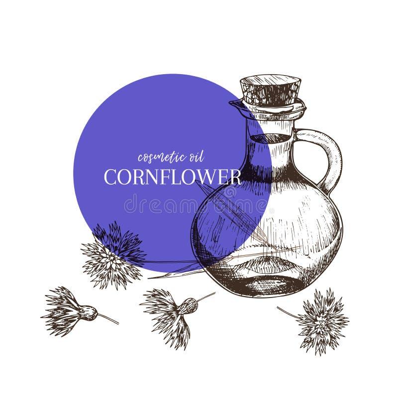 Комплект нарисованный рукой эфирных масел Цветок cornflower вектора Целебная трава с стеклянной бутылкой капельницы Выгравированн иллюстрация вектора