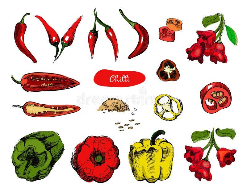 Комплект нарисованных рукой перцев эскиза Иллюстрация вектора красного перца чилей Перец винтажной руки чернил вычерченный, изоли иллюстрация штока