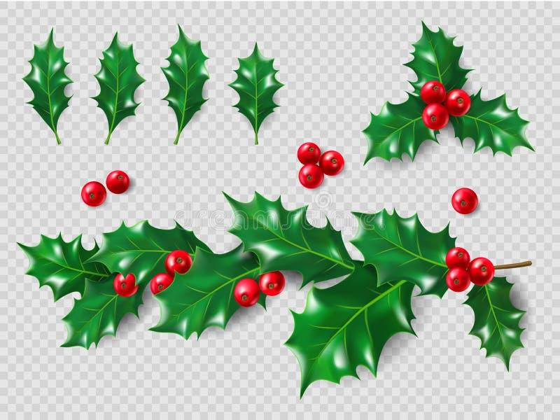 Комплект падуба Реалистические листья, ветвь, красные ягоды год близких украшений рождества новый поднимающий вверх иллюстрация 3 иллюстрация вектора