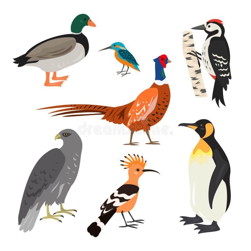 Комплект птиц шаржа милых на белой предпосылке иллюстрация вектора