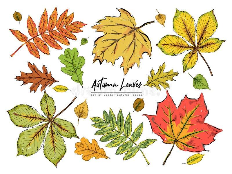 Комплект различных красивых красочных листьев осени изолированных на whit стоковая фотография