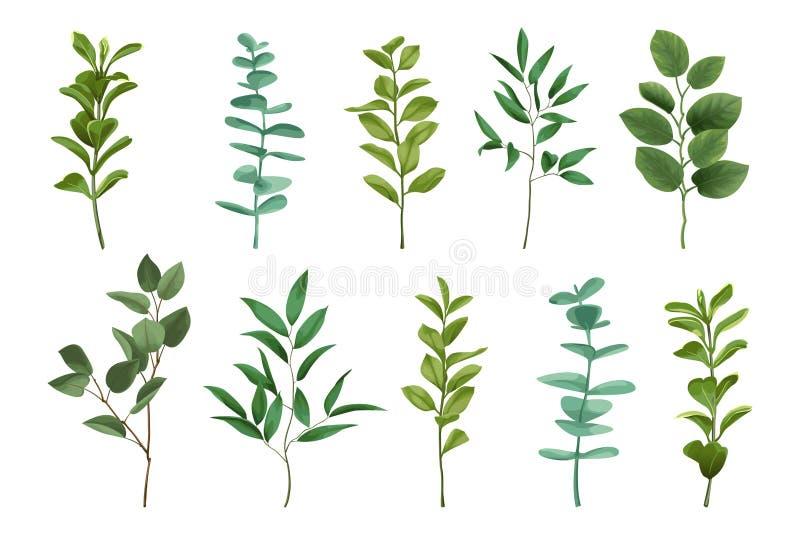 Комплект растительности букета иллюстрация штока