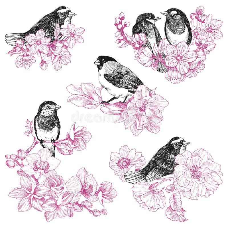 Комплект руки птиц нарисованный в винтажном стиле с цветками Птица весны сидя на ветвях цветения Линейное выгравированное искусст бесплатная иллюстрация