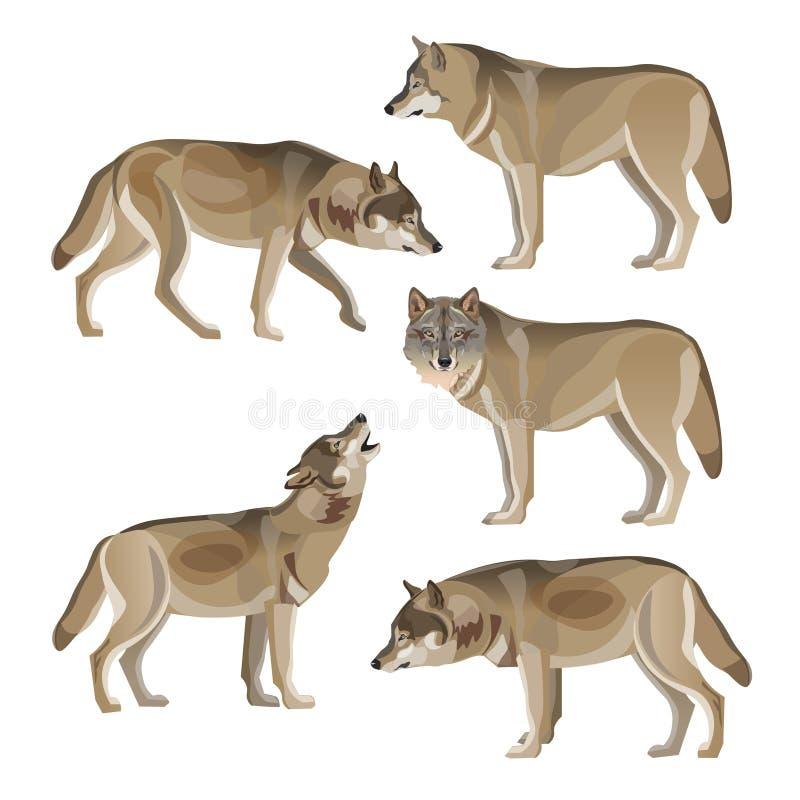 Комплект серых волков бесплатная иллюстрация