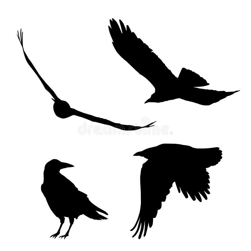 Комплект силуэтов вектора воронов и ворон иллюстрация вектора
