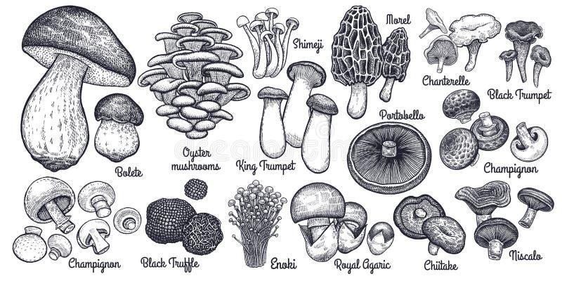 Комплект съестных грибов большой стоковая фотография