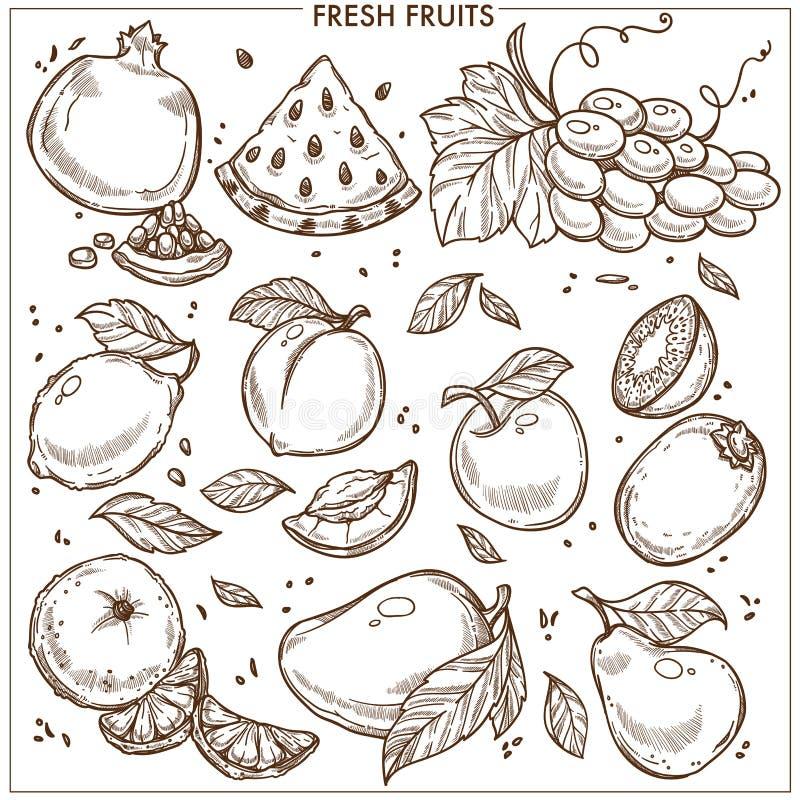 Комплект тропического плодоовощ фермы значков вектора эскиза плодоовощей свежий экзотический иллюстрация вектора