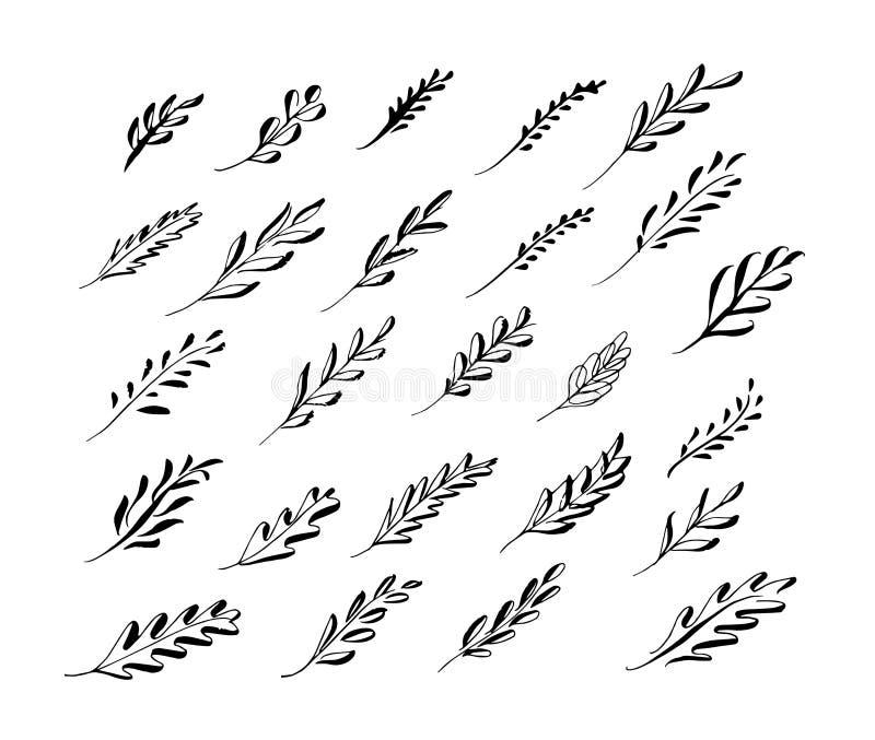 Комплект флористической картины листьев черным по белому Нарисованная рукой беда щетки стоковое изображение