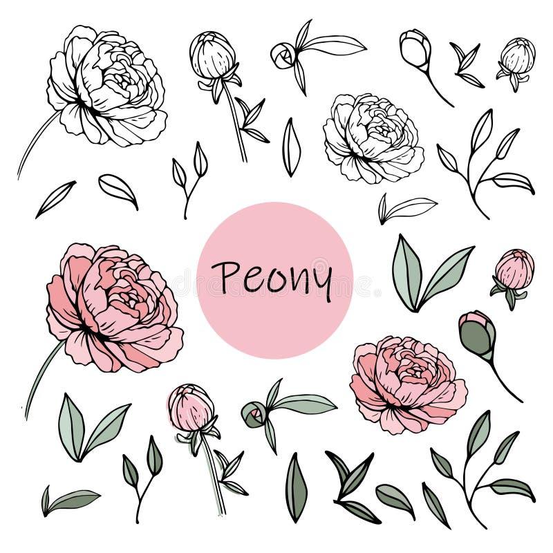 Комплект цветков пиона иллюстрация вектора