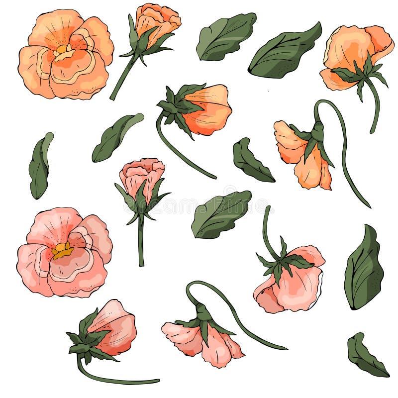 Комплект цветков pansy Вектор запаса бесплатная иллюстрация