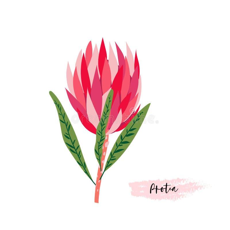 Комплект цветков protea Современное искусство вектора цифровое Яркое розовое, красный, подняло цвета ang зеленые Bloosoms и листь иллюстрация вектора