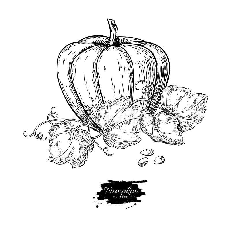 Комплект чертежа вектора тыквы Изолированный объект нарисованный рукой с slic иллюстрация штока